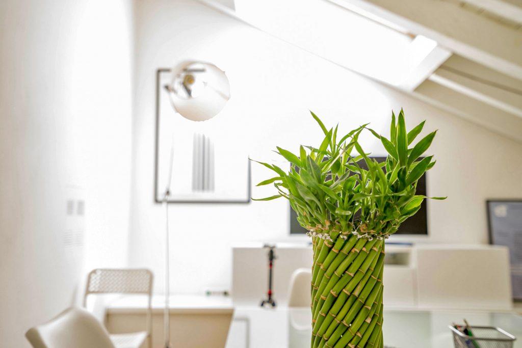 Indoor-living-room-plant-design