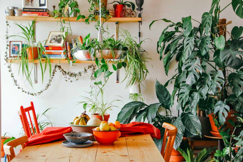Indoor-plant-design-in-dinning-table