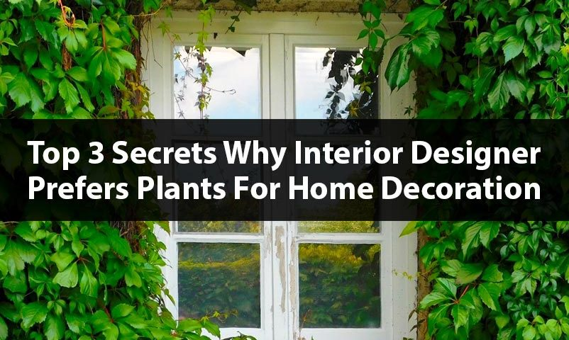Top-3-secrets-why-interior-designer-prefers-plants-for-home-decoration-mew